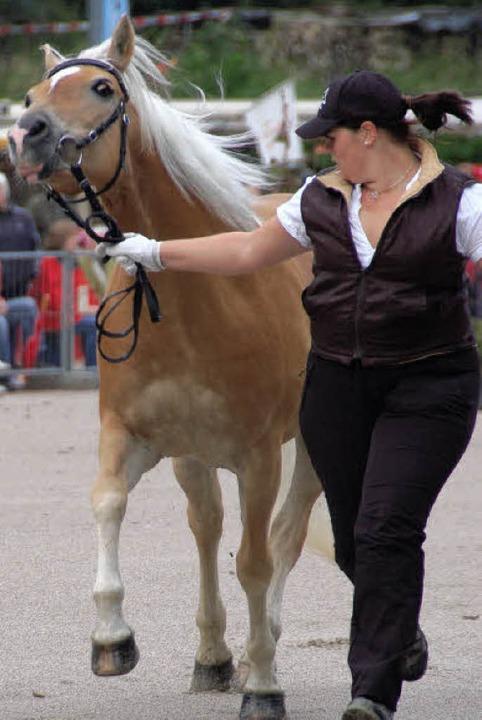 Pferd und Führer gehen nicht immer gerne den selben Weg.    Foto: Markus Maier