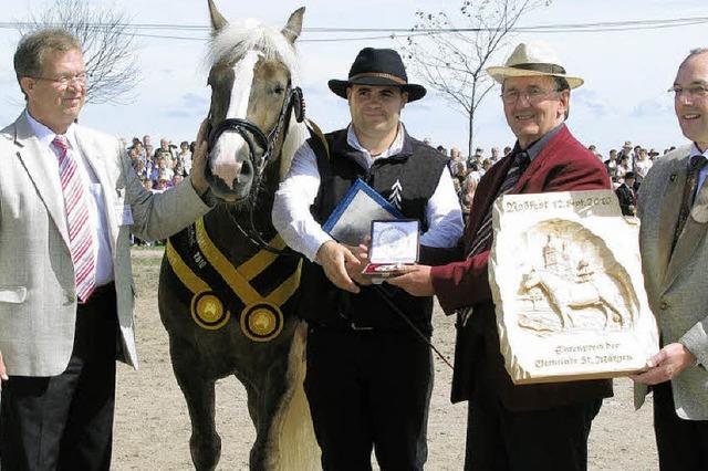 Schöne Pferde vor einmaliger Kulisse