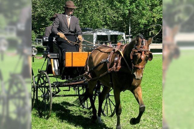 Herausforderung für Reiter und Pferde