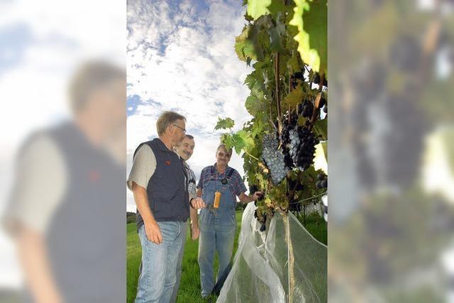 Das Hohelied des Hüsinger Weines