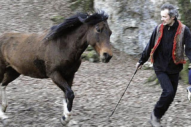 Performance mit Pferden
