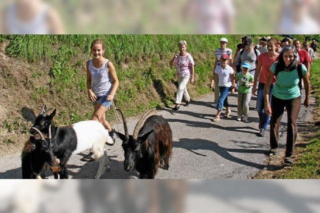 Rinder, Schafe und Gänse