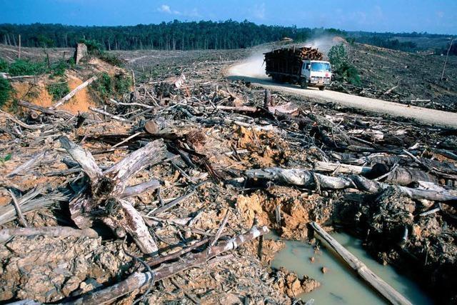 Ecuador lebt vom Öl – und nimmt die Abholzung des Regenwalds in Kauf