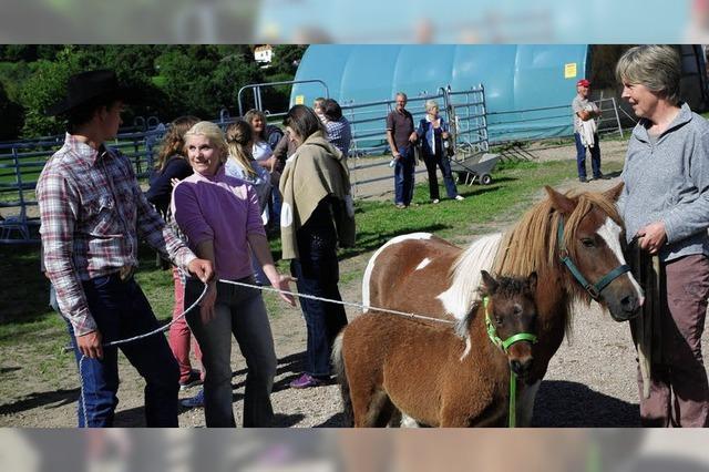 Pferde gewinnen Rennen gegen 50 PS
