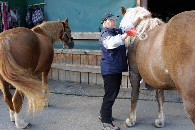 Alles dreht sich um Pferde und Reiten