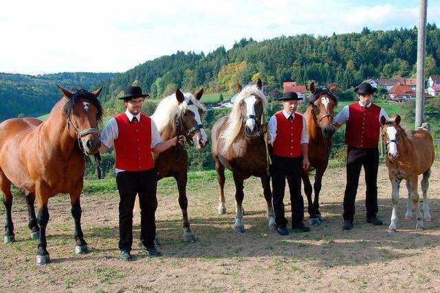 Pferdezucht und artgerechte Haltung