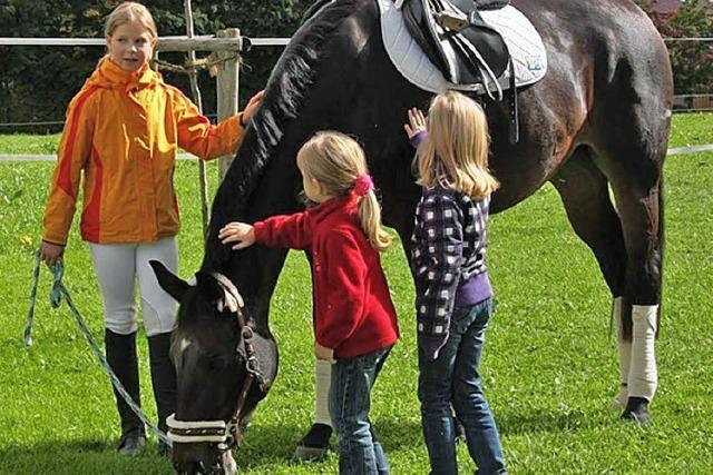 Pferde als Freizeitpartner