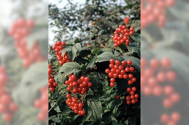 Blüten oder Beeren