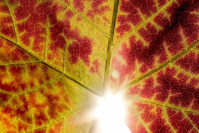 Ein freundlicher, aber kühler Herbstmonat rund um Ettenheim