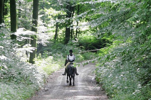 Regeln für Radler und Reiter im Wald