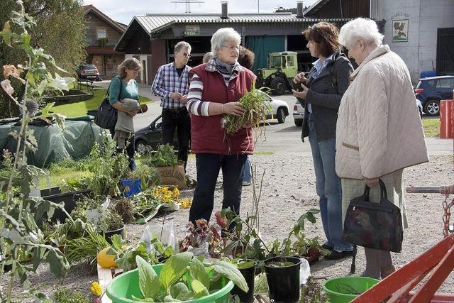 Schnäppchen für Gärtner