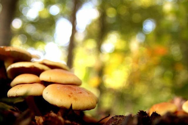 Pilze zwischen