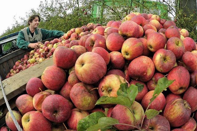 Äpfel in allen Farben und Formen