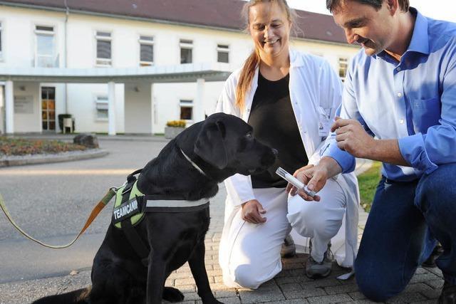 Studie beweist: Hunde können Lungenkrebs erschnüffeln