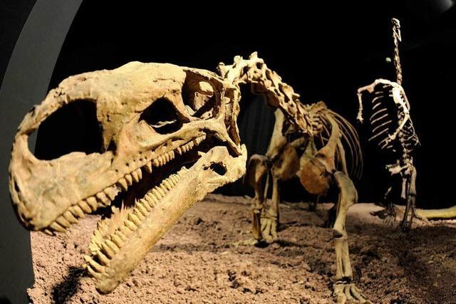 Auberlehaus Trossingen: Neuer Acht-Meter-Dino