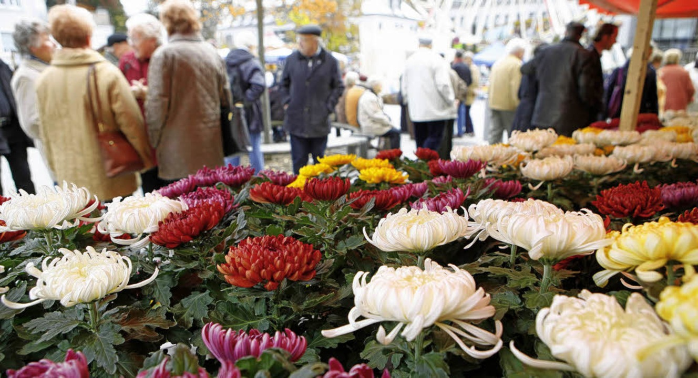 Lahr ist wieder drei Wochen lang im Bann der Chrysantheme.   | Foto: Archiv: Christoph Breithaupt