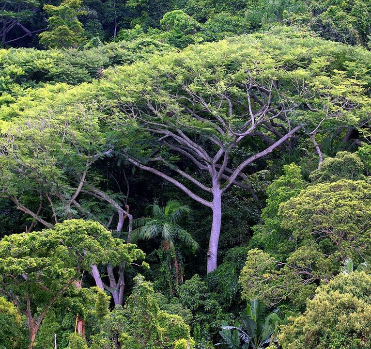 Den Regenwald erhalten mit Hilfe eines... Vertrags, das will Jochen Flasbarth.   | Foto: dpa