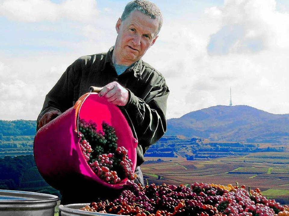 Die Qualität der Trauben ist in diesem Jahr ordentlich.  | Foto: Herbert Trogus