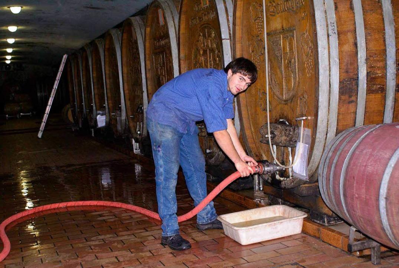 Nachdem der Most im Fass ist, haben di...zerkellers  nun im Keller viel zu tun.  | Foto: Badischer Winzerkeller