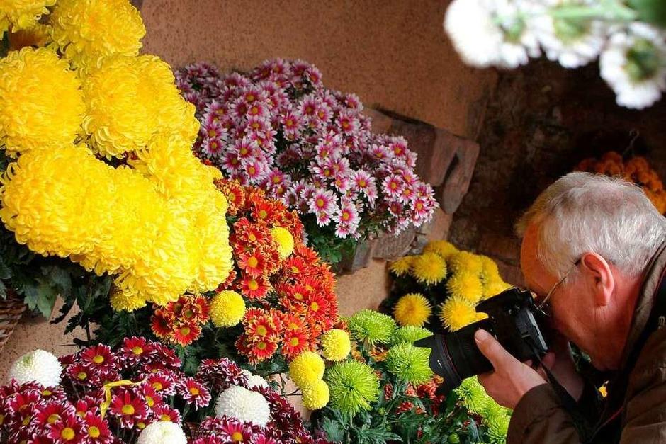 Im trüben Herbst sorgt Lahr für bunte Farben (Foto: Heidi Foessel)