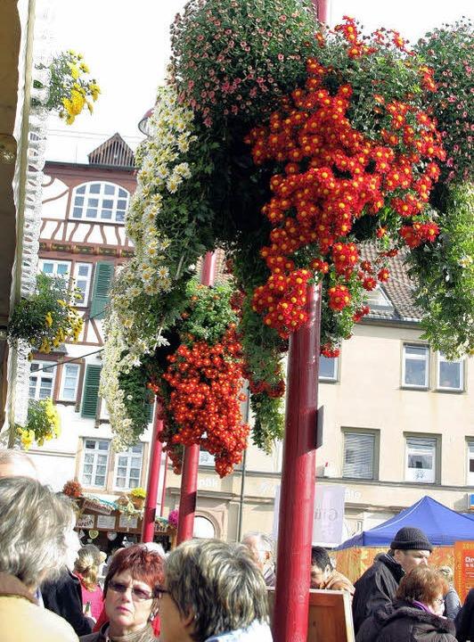 Bunte Chrysanthemen auf dem Marktplatz   | Foto: Heidi Fössel