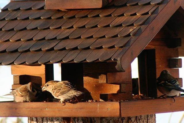 Streitfrage: Wann sollen Vögel gefüttert werden?