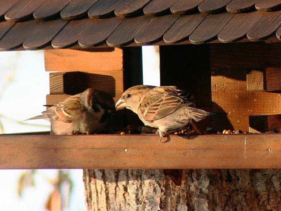 Fehlende Nährstoffe können bei der Sommerfütterung zu Krankheiten  führen.  | Foto: Wilfried Dieckmann