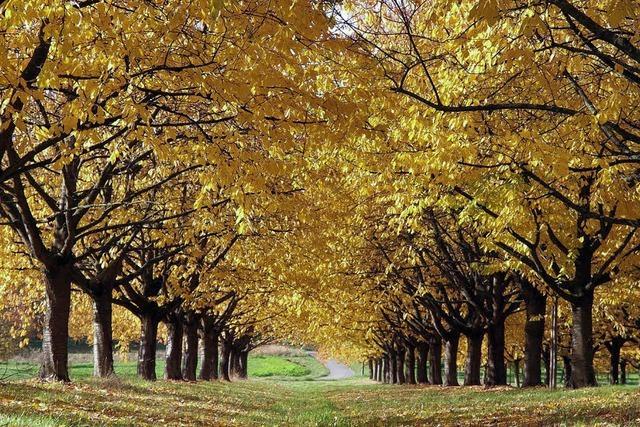 Herbstliche Farbenspiele