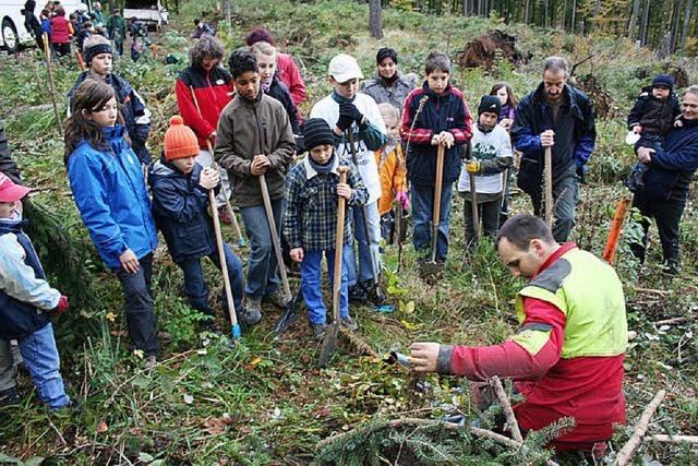 40 Helfer pflanzen 900 Bäume
