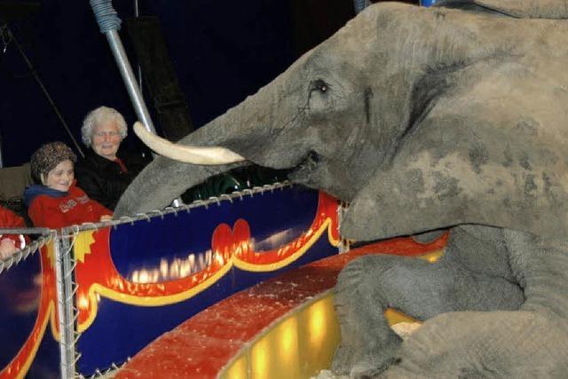 Elefant Benjamin ist der
