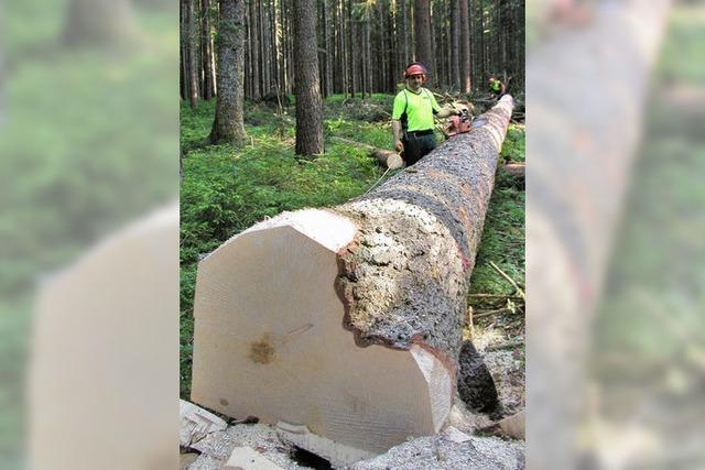 Holz bringt mehr als 650 000 Euro