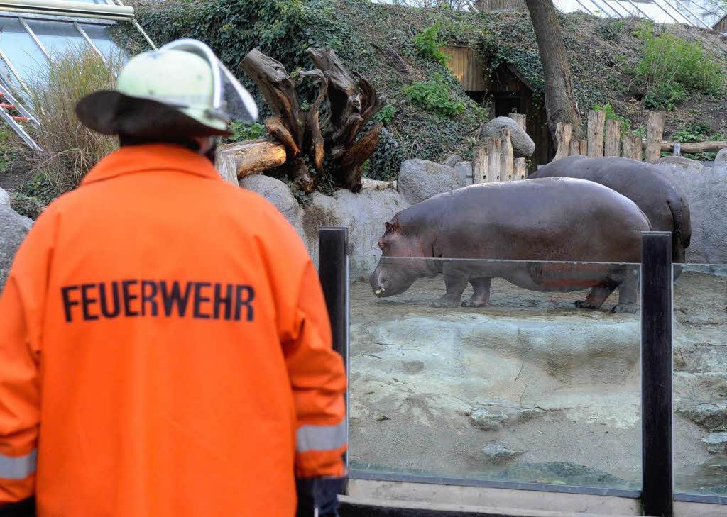Brand Im Zoo