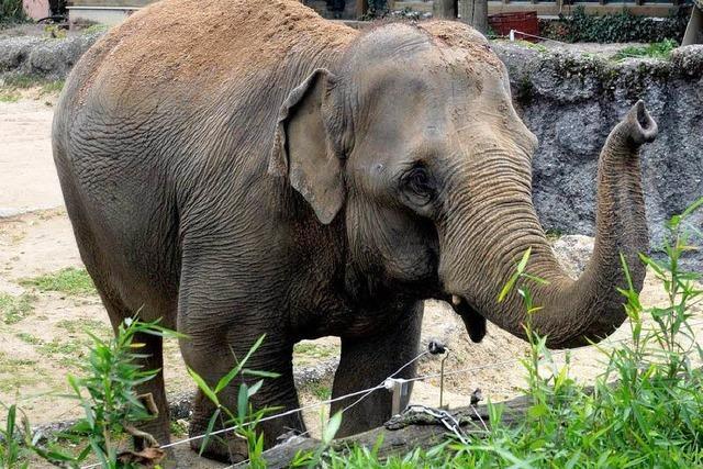 Sorge um verletzte Elefanten nach Brand im Zoo