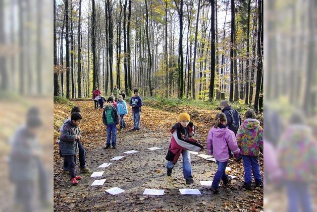 Schüler entdecken die Vielfalt des Waldes