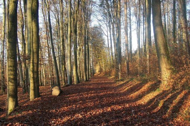 Der Wald wirft Gewinn ab