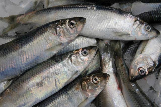 Nach Todesfall erneute Warnung vor Fischkonserven