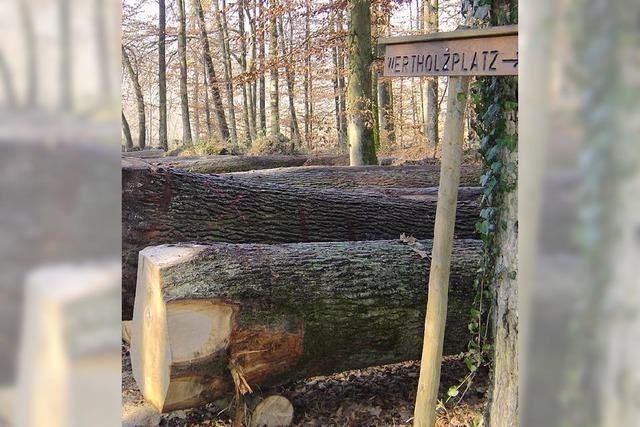 Gemeindewald liefert hochwertiges Holz