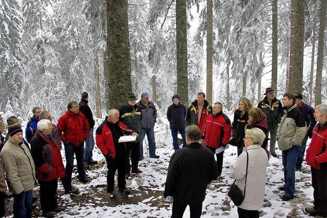 Todtnauer Wald bringt Rekordgewinn