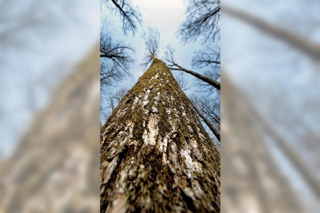 Waldgewinne schießen in die Höhe