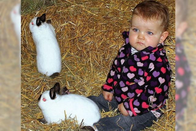 Bunte Vögel und silberne Kaninchen