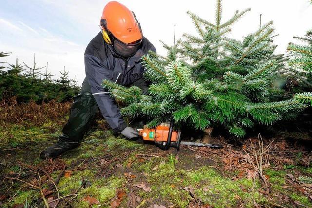 Wie viel Weihnachtsbaum darf sein?