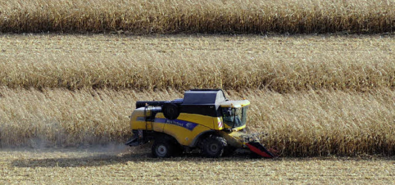 Immer weniger Bauern bearbeiten immer ...ft steht vor einer unsicheren Zukunft   | Foto: Gollrad