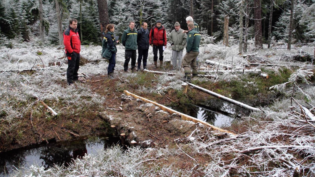 Forst- und Umweltexperten informierten...g des Harzmoos- Moores bei St. Peter.     Foto: Andreas Peikert