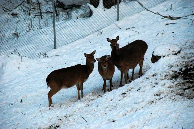 Schwarzwaldzoo wegen Schnee zu