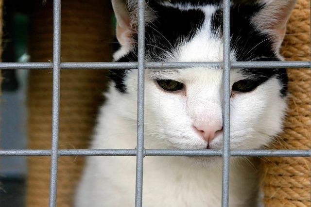 Tierschützer wollen streunende Katzen kastrieren