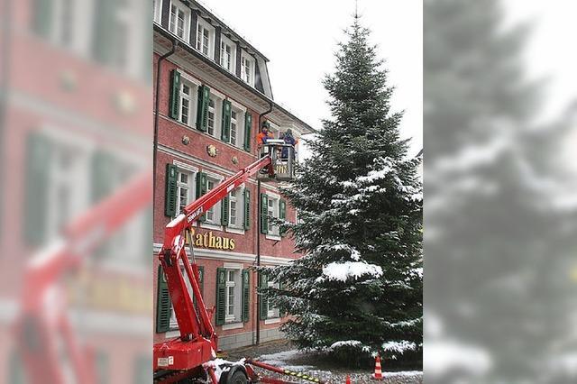 Weihnachtsbaum mit einer Rekordgröße