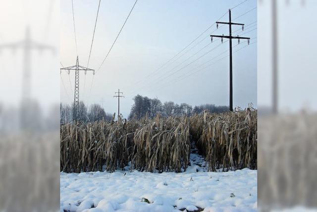 Maisfelder im Schnee