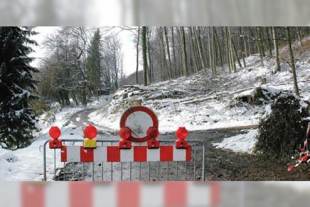 Holzeinschlag sorgt für Zoff