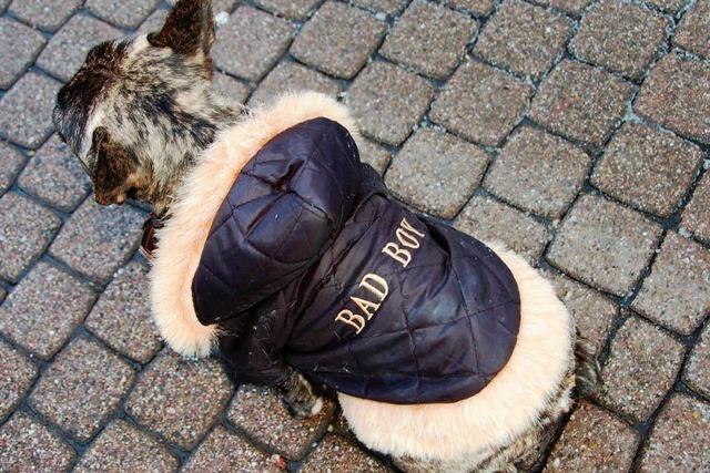 Eine Steuer für drei Hunde