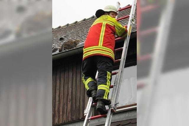 Wehr holt Katze vom Dach